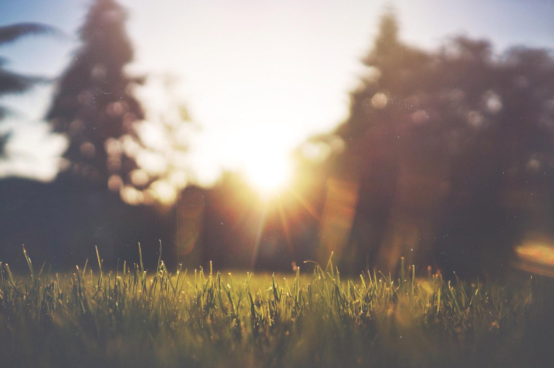Deep Green Lawn Care & Landscaping - Alabaster, Pelham, Chelsea, Hoover, Vestavia
