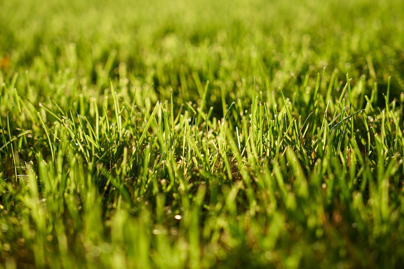 Lawn Care Alabama - Grass